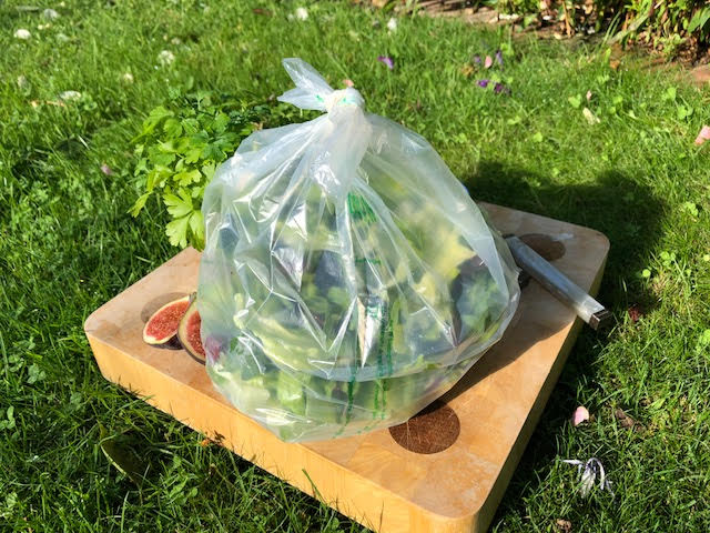 Clear Salad Bag_tied